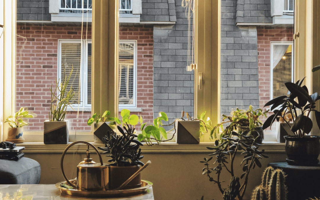 Beautiful ways to take care of the planet  – Ch 2 : (Indoor) Air