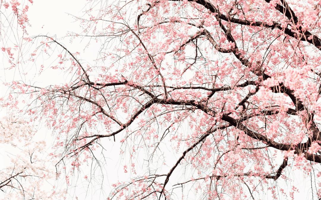 Vernal Equinox: Springtime Mementos